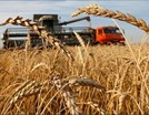 Амбары Санкт-Петербурга пополнятся на 84 тонн зерна