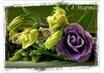 С праздников Весны, милые женщины!